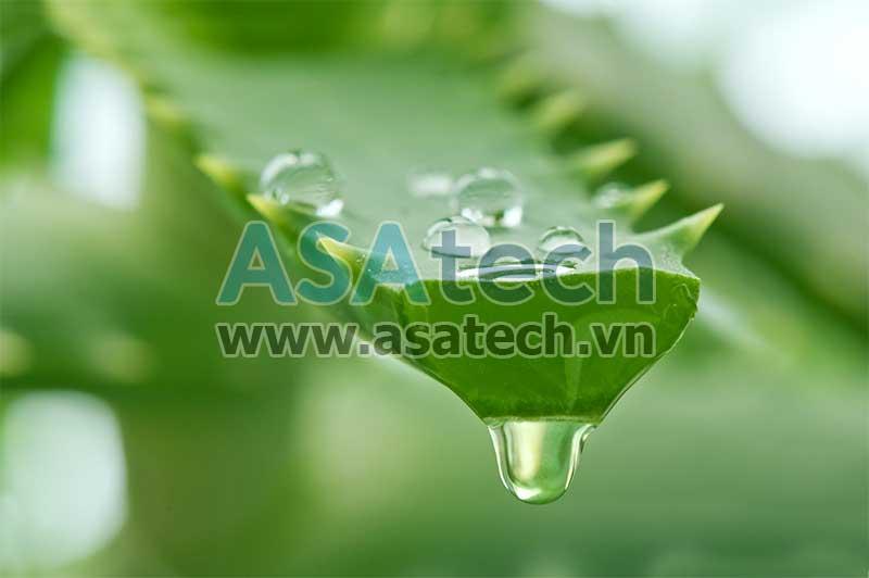Nha đam có thể thay thế glyxerin để làm chất tạo gel và chất giữ ẩm cho gel rửa tay khô